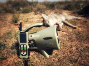 Coyote, Hunting Predator Call